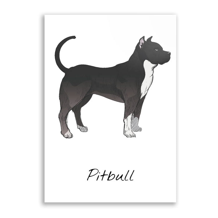 Quadro pitbull