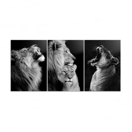 Trio Quadros ou Placas decorativas casal leões