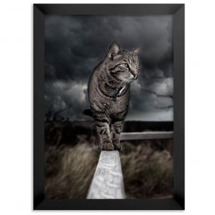 Quadro Gato no Muro