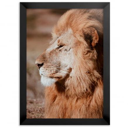 Quadro Leão de Perfil