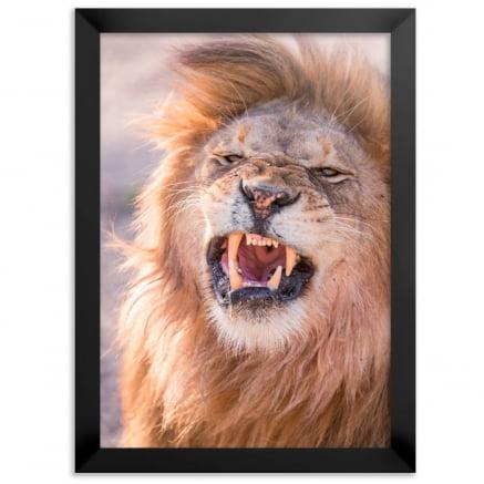 Quadro leão Raivoso