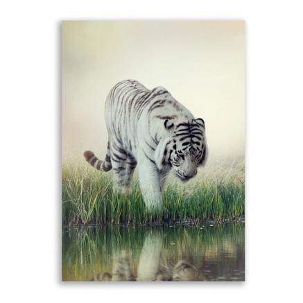 Quadro Tigre Branco