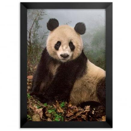 Quadro Panda fazendo pose