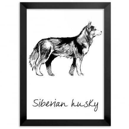 Quadro Husky Siberiano pet